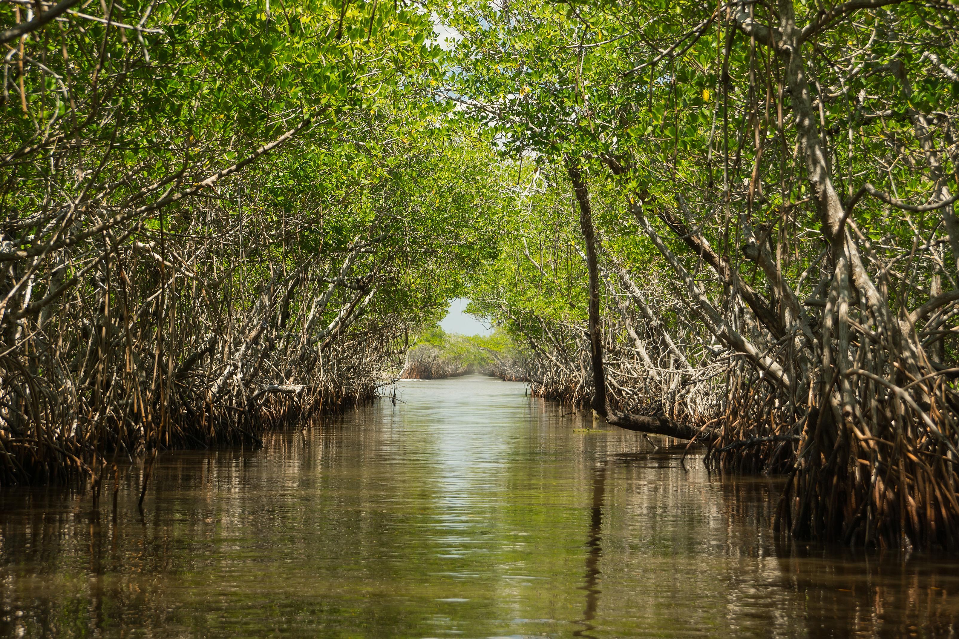 Swamp Tours Northern Florida